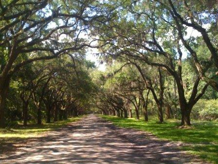A lane of live oaks and Spanish moss at Wormsloe on Isle of Hope